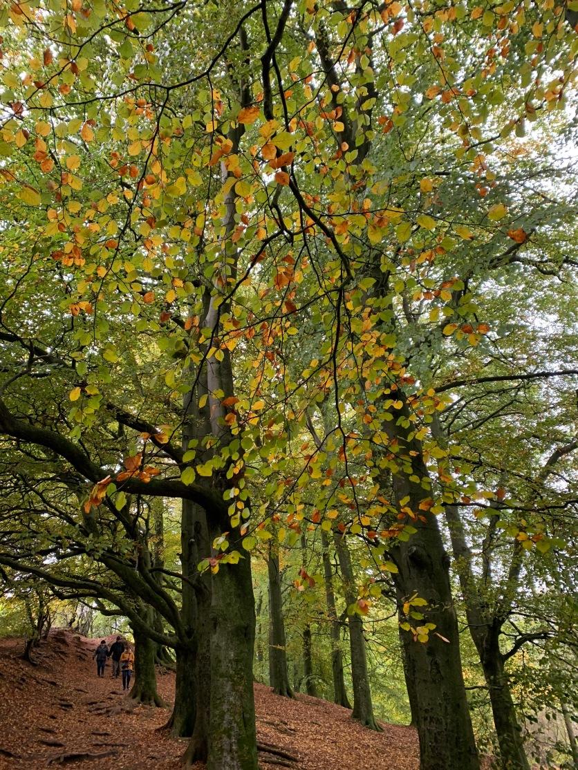 autumn-picturejpg